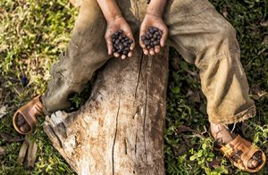 Coffee Fermentation: What is it, and Why Does it Matter?